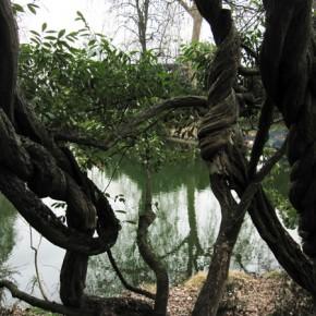 樹木の不思議 PHOTOS