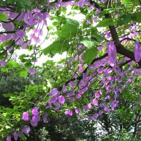 光合成の木、10年