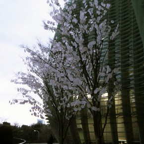 今日のPHOTO・記録写真「光合成の木」4