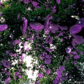 今日のPHOTO・記録写真「光合成の木」3