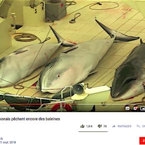 日本の捕鯨商業化へ、批判高まる