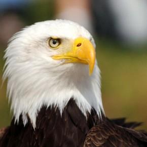 アメリカ、絶滅危惧種、保護法の改悪