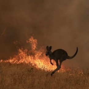 衝撃のオーストラリア火災